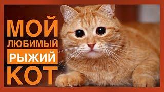 Мой любимый рыжий кот/ веселая песенка