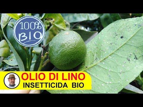 , title : 'OLIO DI LINO INSETTICIDA BIOLOGICO tutte le indicazioni