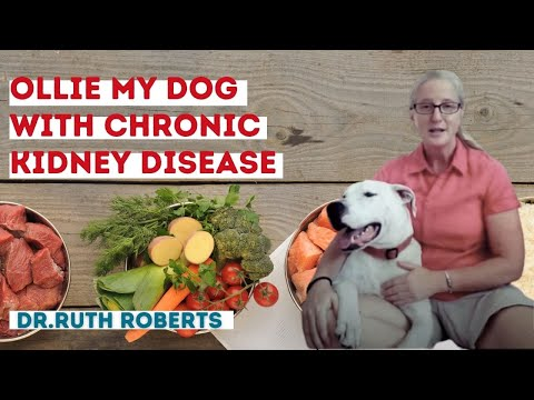 Video Ollie my dog with Chronic Kidney disease