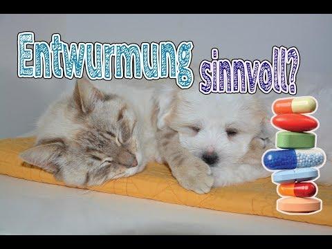 Entwurmung bei Hund und Katze   wie oft entwurmen & Alternativen