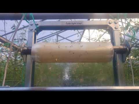 Sakit na nagiging sanhi ng fungi parasito