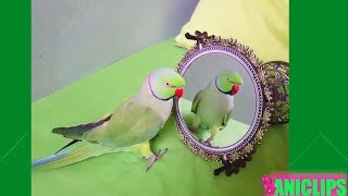 Animals in Mirrors For the First Time Hilarious Reactions