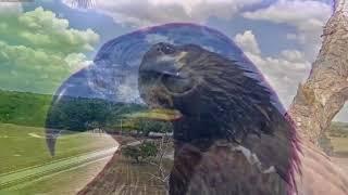 """Somewhere Out There""- Farewell Tribute to E10 & E11, Southwest Florida Eagles, SWFEC"