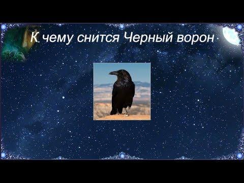 К чему снится Черный ворон (Сонник)