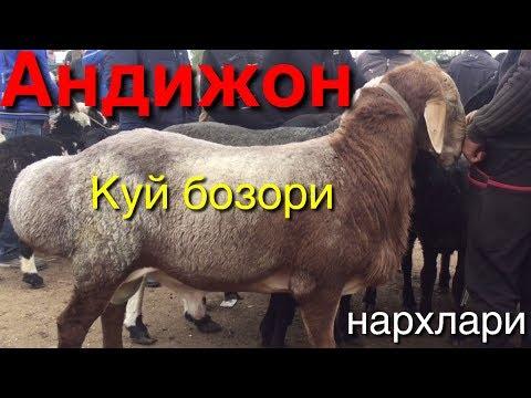 Андижон куй бозори нархлари 14- октябрь