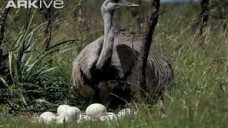 avestruz.mpg   Kholo.pk