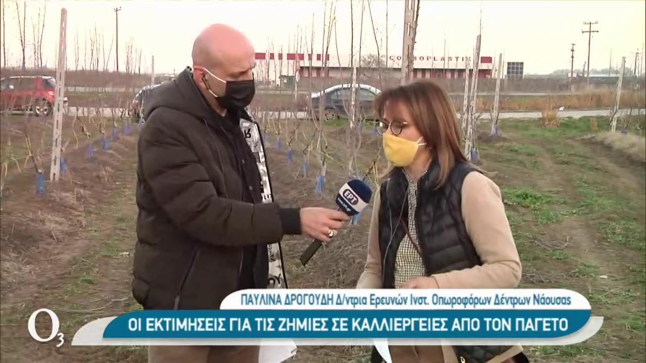 Ο παγετός χτύπησε τους οπωρώνες   23/02/2021   ΕΡΤ