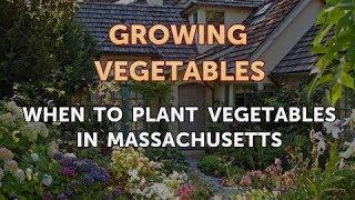 When to Plant Vegetables in Massachusetts