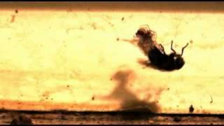 Video Co dokáže strakapoud