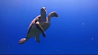 Une clinique pour les tortues!!