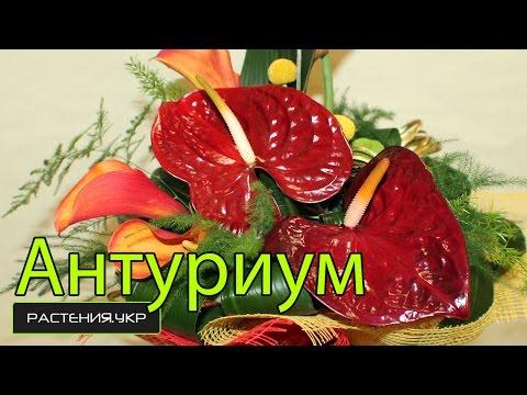 Витас песня о счастье текст песни