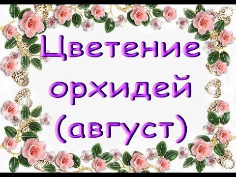Август:ЦВЕТУЩИЕ ОРХИДЕИ.Приветы Валентине,Валерии и Елене!