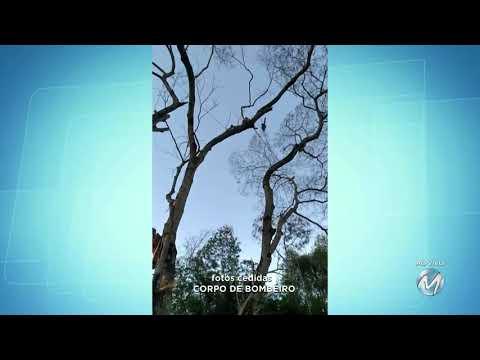 Bombeiros resgatam homem de árvore em Bicas