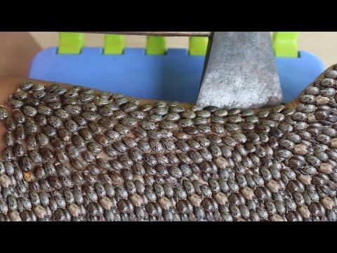 Pinworms kezelése mennyit
