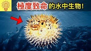 10個世界上【最致命的魚】!比食人魚更可怕!