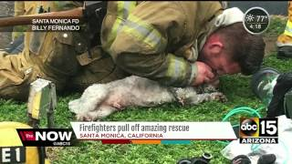 Firefighters save unresponsive dog from fire and resuscitate her