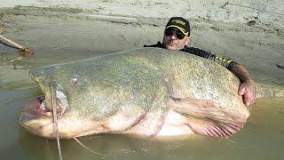 สุดยอด การ ตกปลา ปลาดุก ยักษ์ แห่ง แม่น้ำ คงคา