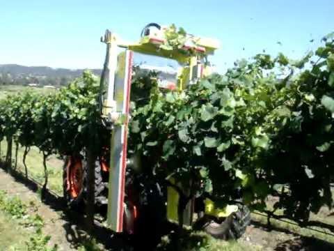COLLARD szőlőcsonkázók