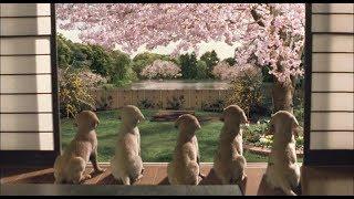 【宇哥】10分钟看完8.4高分感动全世界的神片《导盲犬小Q》比纪录片还真实的电影,太震撼人心了!