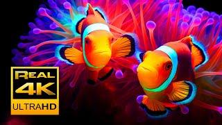 Beautiful Clown Fish Aquarium & Relaxing Music in 4K - Sleep Meditation - 2 hours - UHD Screensaver