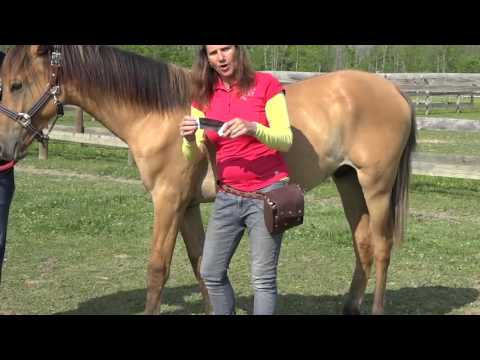 Equine Taping Overview