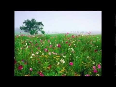 Dias y flores - Silvio Rodriguez