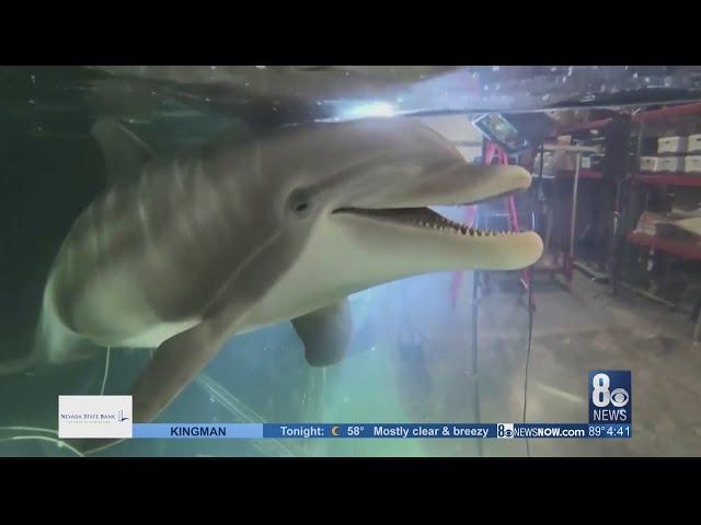 Инженеры разработали гиперреалистичного робота-дельфина для аквапарков