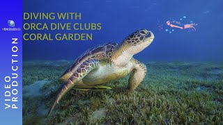 Scuba diving in the red sea with Orca Dive Clubs Coral Garden