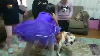 Bakın pitbull çocuklara ne yapıyor (boyka doğum gün partisinde)