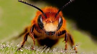 Что будет, если исчезнут все насекомые
