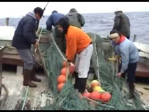 Pesca di piccolo fritto video su un bezmotylka
