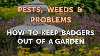 How to Keep Badgers Out of a Garden