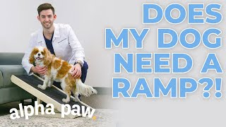 Does My Dog Need A Ramp?