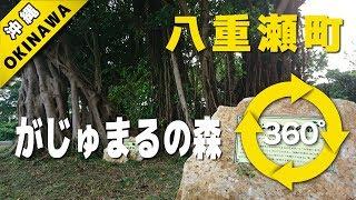 VR動画で沖縄 ツアー『八重瀬町-がじゅまるの森-』4K 360°カメラの動画