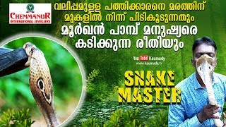 Wow! Large hooded Cobra caught from a tree | Vava Suresh | Snakemaster | EP 382