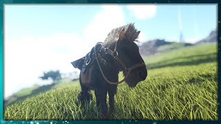HOW TO TAME A EQUUS (HORSE) IN ARK: SURVIVAL EVOLVED