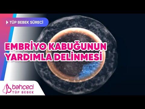 Embriyo kabuğunun yardımla delinmesi