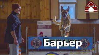 Барьер, учим прыгать барьер за еду, за игру.  Как сделать барьер если его нет под рукой .