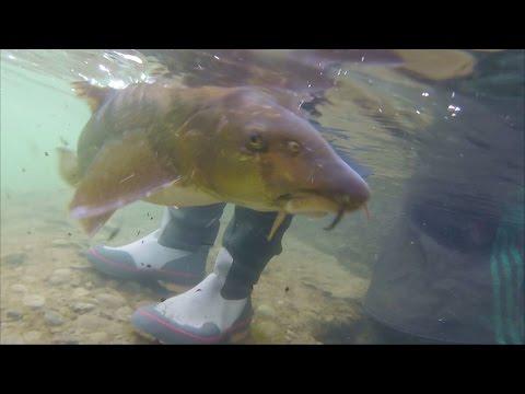 La pesca in Mari El zvenigovo