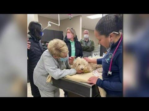 Dog rescued after 4 days stranded on frozen Detroit River