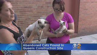 Abandoned Cats Rescued From Queens Construction Site