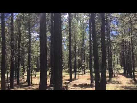 Video Of FR 222 Dispersed, AZ