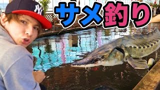 サメが居る釣り堀で沢山釣るぜ!!   PDS