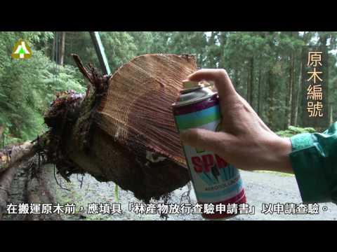 臺灣人工林收穫作業實務示範影片(8/8)—原木檢尺放行流程