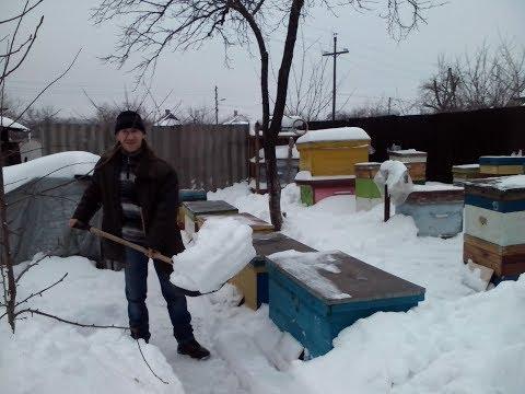 Зимовка пчел на воле 26.01.2018. канди. Подкормка пчел зимой. Канди для пчел.