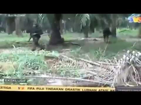 Terkini Lahad Datu,Sabah Detik Cemas Wartawan TV3 Hadapi Serangan Hendap Pengganas Di Lahad Datu
