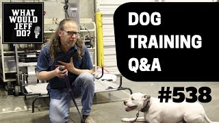 Stop dogs from Fence Charging   Training a Biting Dog   What Would Jeff Do? Dog Training Q & A #538