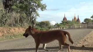 preview picture of video '7 ngày du lịch Myanmar với Vietnam Airlines khuyến mại T.P Hồ Chí Minh tới Yangon(Myanmar)'