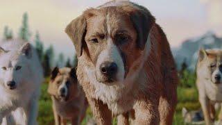 狗狗爱上了一条白狼,还生下了几只小狼狗,最终成为狼族首领