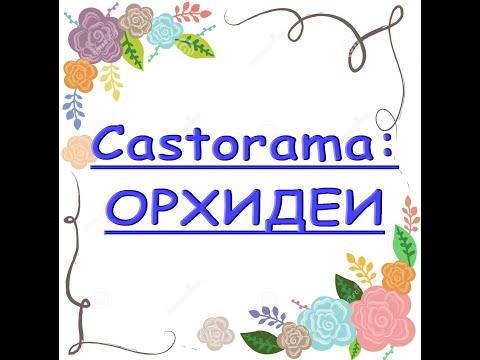 ЗАВОЗ прекрасных ОРХИДЕЙ в Castorama,26.02.21.Касторама,Самара.